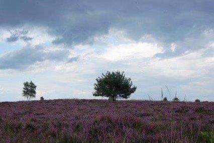 Onderzoek stikstofdepositie voor een aanvraag Natuurbeschermingswet of omgevingsvergunning